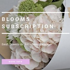 Bloom Social Instagram bloomsocial.nz