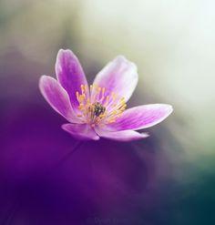 composition art floral 74 #fleurs #bouquet
