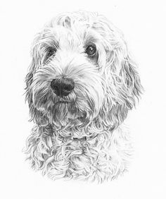 Pencil Portrait Drawing of a dog in graphite pencil on paper. Click the picture or the 'read it' button above to see the pencil portrait gallery - Pet portraits in pencil and oils. Animal Paintings, Animal Drawings, Art Drawings, Drawings Of Dogs, Horse Drawings, Dog Pencil Drawing, Cool Pencil Drawings, Pencil Art, Doodle Dog
