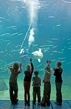 Nordsøen Oceanarium - Nordeuropas største akvarium