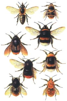 Google Image Result for http://www.theunstunghero.com/assets/images/Decopage_Bee_Print_eBay.jpg