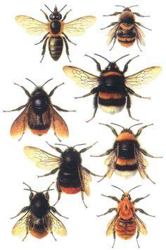 Google Image Result for http://www.theunstunghero.com/assets/images/Decopage_Bee_Print_eBay.jpg