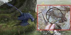 Dinosaurus Mini Doyan Sashimi - INILAH.com