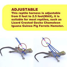 Adjustable Reptile Training Lead Harness Leash Nylon Rope for Lizard Crested Gecko Chameleon Guinea Pig Ferrets Hamster Rats (Blue) Reptiles, Pet Lizards, Bearded Dragon Terrarium, Bearded Dragon Diet, Iguana Pet, Red Eared Slider Turtle, Turtle Homes, Reptile Room, Crested Gecko