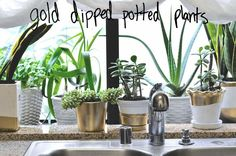DIY: Gold Dipped Pots