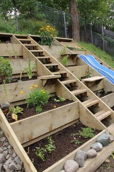 Hillside planters with stairs going up to the top. What a fantastic way of gardening in a backyard with a hillside slope!!!