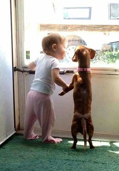 Cute pair of best friends: toddler and dachshund Dogs And Kids, Animals For Kids, I Love Dogs, Puppy Love, Baby Animals, Funny Animals, Cute Animals, Funniest Animals, Funniest Gifs