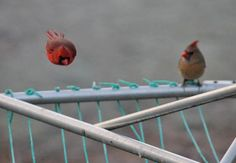 Real life Angry Birds. (Photo by Birds & Blooms reader by R. Guennel of Gilbertsville, Kentucky.)