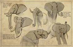 Tembo - How to draw elephants packet I created for the crew.