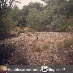 Aquí todo el mundo es feliz. TODOS. Ese es nuestro objetivo  Repost from @pablecaspotrodevallecas using @RepostRegramApp - Feliz!  #monte #campo #monroyo #teruel #country #pepa #lapepa #pepapug #peppapug #pepapugthedog #pug #carlino #mops #carlin #perro #dog #naturaleza #nature