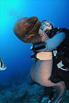 Мурена.  Очень ядовитая глубоководная рыбка