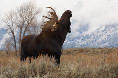 Moose. I love moose.