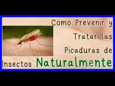 Remedio Natural de Aloe Vera Para las Picaduras de Insectos