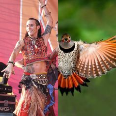 maybe....I'm not sure ☺️✌🏻 #atsflockofbirds #ats #tribal