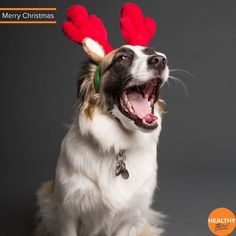 It's only 2 weeks until Christmas so don't let Christmas food cause an out of hours vet visit - we've compiled a list of foods to keep out of reach this festive season ❌Grapes and Raisins ❌Nuts ❌Alcohol ❌Turkey Bones ❌Chocolate There a lots of pet foods and treats available designed to be safe for your cat and dog so you can still spoil your pet this Christmas #pets #christmas #cats #dogs #HealthyPetsInsurance Dog Training Methods, Puppy Training Tips, Training Your Dog, Pet Dogs, Dogs And Puppies, Dog Behavior, New Puppy, Funny Dogs, Your Pet