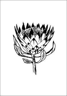 Flowers and fruit – Page 2 – SilkScreen Stencils Flower Sketches, Flower Drawings, Drawing Flowers, Pencil Drawings, Protea Art, School Murals, Silhouette Machine, Mural Art, Linocut Prints