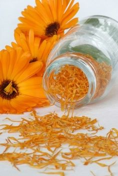 Marigold Has Both Medicinal And Culinary Uses - Jowita Stachowiak
