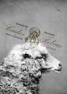 Cabeça de ovelha c.1870- CARLOS RELVAS