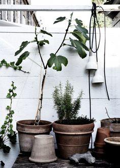 garden inspiration on ergenstussenin. Green Garden, Green Plants, Potted Plants, Indoor Plants, Cactus Plante, My Home Design, Plantation, Garden Inspiration, Gardens