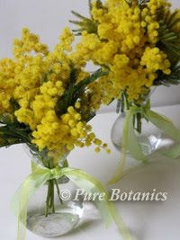 yellow mimosa flower, pretty and unique for an accent in centerpieces and displays