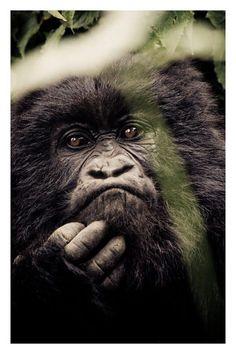 Chimpance!!!