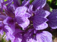 Orquídea da Madeira. By Cleciodelacerda