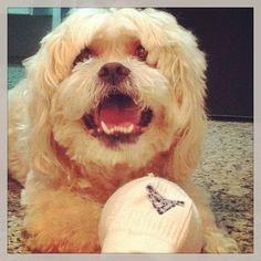 #boris #cão #cachorro #dogs #dog #bola #bolademeia