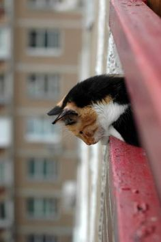just like my cat I made my balcony cat safe but made little holes where she can look down at the playing children.