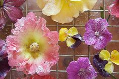 Edible flowers - You'll need:    *Generous handful of edible flowers     *1/2 egg whites, depending how many flowers    *Superfine sugar    Gently wash flowers & pat dry with clean towel.  Beat egg whites in a small bowl. Pour  sugar into another bowl. Carefully dip the flowers into the egg whites, then roll in sugar, covering all sides.  Set flowers on a cookie sheet and allow to dry in a warm place. Store in a flat container with waxed paper between the layers. These will last several…