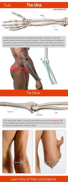 Here's a detailed look at the ulna. Learn more about how to draw the arm bones at proko.com/anatomy.