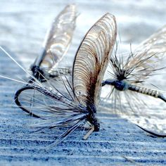 "87 Likes, 1 Comments - Chris Williams (Chris Williams) on Instagram: ""Callibaetis ready for morning action! #flytying #flyfishing #flytyingjunkie #otzinger #mayfly…"""