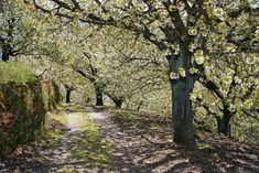 Top 10 de lugares más coloridos para estrenar la primavera