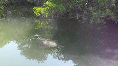 Galápagos, tortuga marina, foto de nuestra estudiante Dhamee Tailor