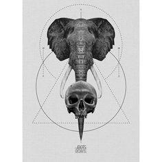#Elephant & #Skull