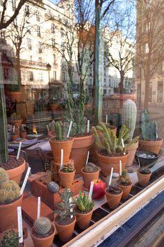 JOELIX.com   Les Succulents Cactus shop in Paris