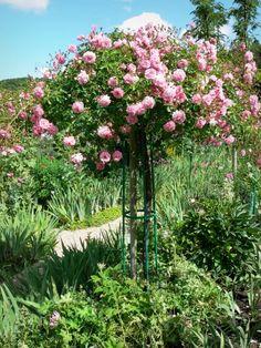Casas y jardines de Claude Monet: Jardín de Monet en Giverny: Clos Normand: rosa en flor (rosa) - France-Voyage.com