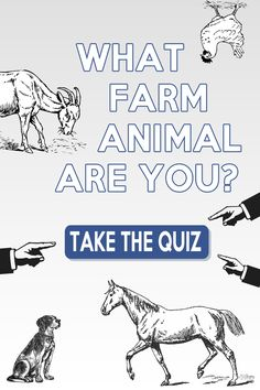What Farm Animal Are You? Take the #quiz!