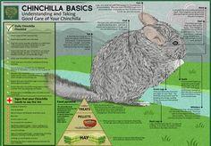 Terrific supplies for rabbits, guinea pigs, small animals, dogs, cats Chinchilla Facts, Chinchilla Care, Animals And Pets, Cute Animals, Small Animals, Secret Life Of Pets, Paludarium, Exotic Pets, Guinea Pigs
