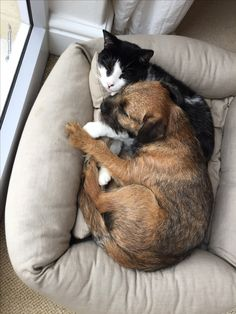 Rosie the border terrier and her cat Bertie Border Terrier Puppy, Terrier Dogs, Best Dog Breeds, Best Dogs, Doggies, Dogs And Puppies, Baron, Dog Toys, Cats And Kittens