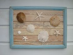 Sand Dollar & Starfish Framed Art on Reclaimed by My Honeypickles