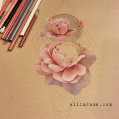 Part of my drawing process. Witchy peony in colored pencil on strathmore toned paper. Elliadams.com, instagram:elliadamstattoos