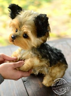 Puppy York Jemmy (make to order) Portrait pet , handmade animal by photo Tiny Puppies, Teacup Puppies, Puppies For Sale, Cute Puppies, Puppies Tips, Pomsky Puppies, Spaniel Puppies, Puppys, Teacup Yorkie