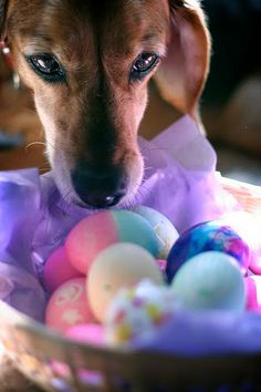 Are eggs good for pets? http://pawsforreaction.blogspot.ca/2014/04/eggs-in-pets-diet.html