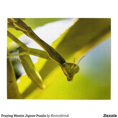 Praying Mantis Jigsaw Puzzle
