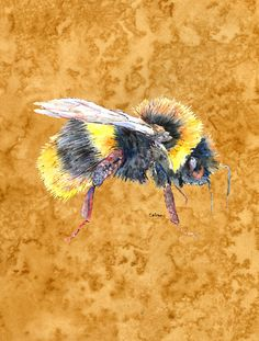 Bee on Gold 2-Sided Garden Flag