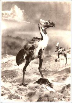 Phororhacos | Zdeněk Burian (1905-1981) | Prehistoric Animals (1960)