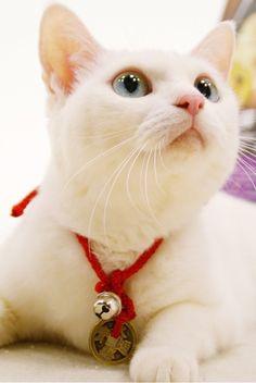 『猫侍』 あなご cat                                                                                                                                                                                 もっと見る