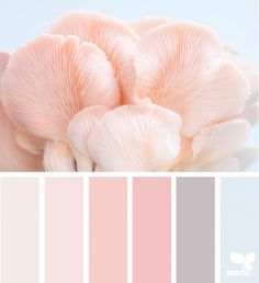 Color Nature color palette by Design SeedsJessica Colaluca is principal and owner of Seed Design Consultancy, and creator of Design Seeds.today's inspiration image for { color shore } is by . thank you, Nicolette, for another wonderful image share! Color Palette For Home, Pastel Colour Palette, Colour Pallette, Colour Schemes, Pastel Colors, Color Combos, Spring Color Palette, Nature Color Palette, Colours