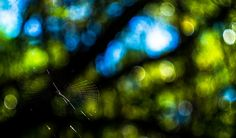 Web on a Canvas