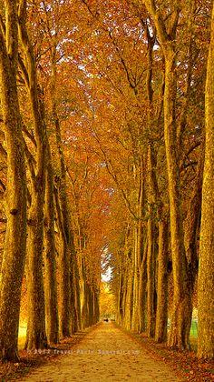 Lausanne in Autumn, Switzerland